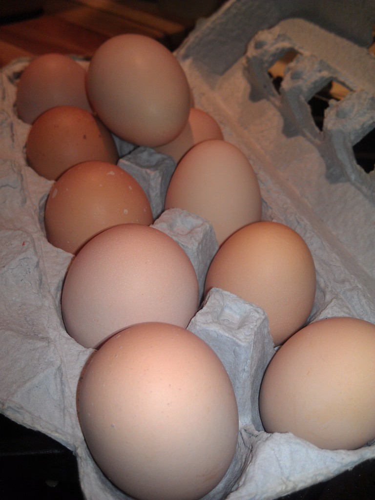 One of the things we are grateful for is our wonderful neighbors - and their amazing eggs!