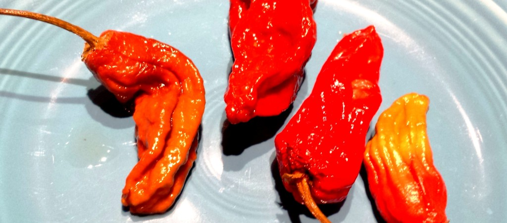 Quick Pickled Ghost Peppers - Hot and Delicious!!